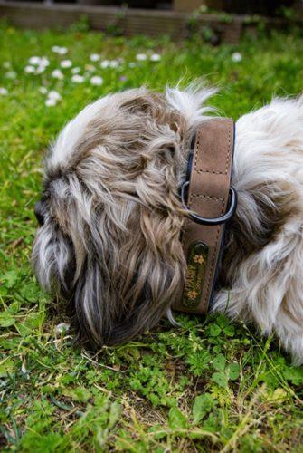 Hundehalsband mit Namen Review 6