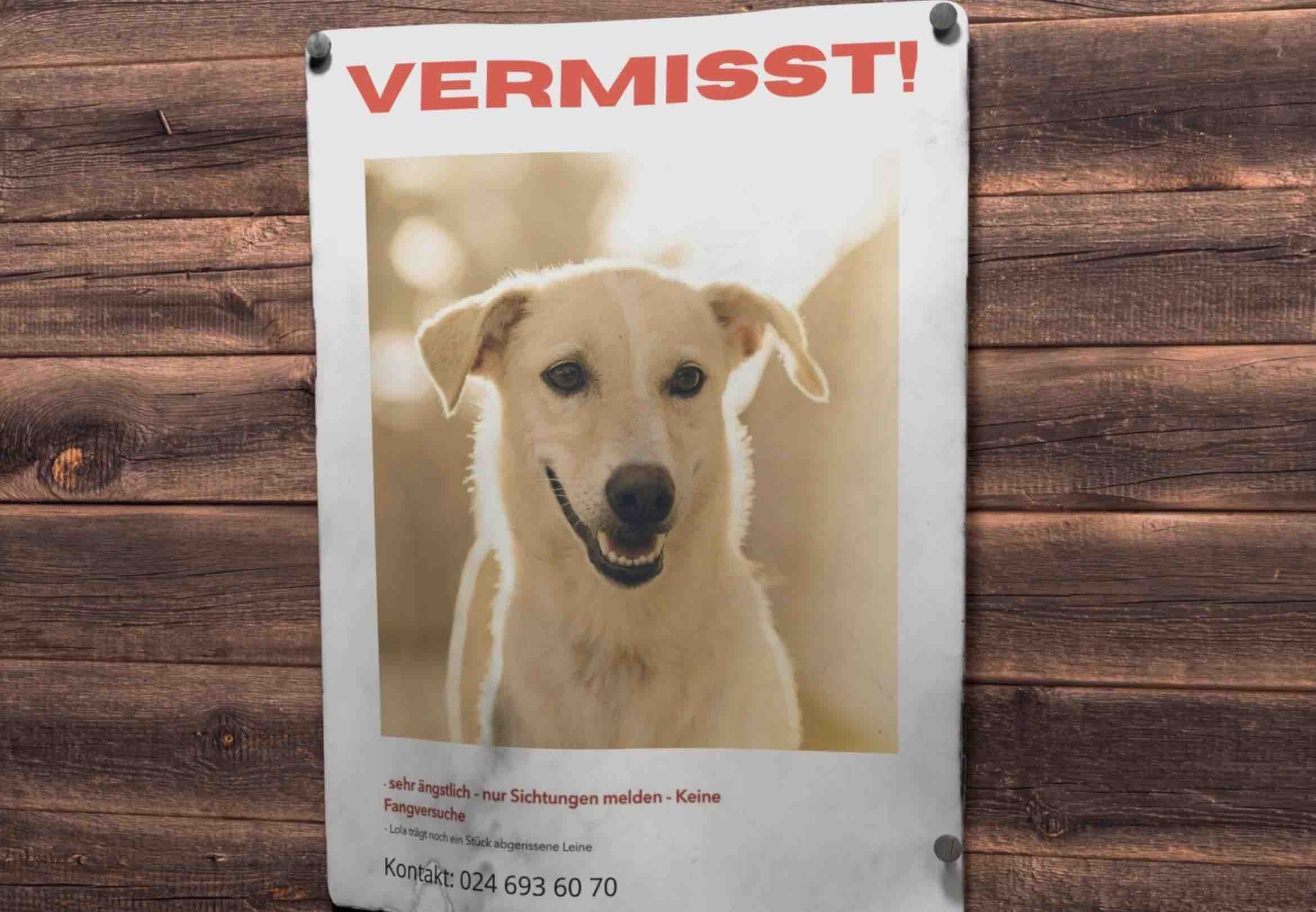 Hundehalsband mit Namen 46